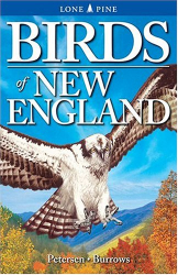 Roger Burrows: Birds of New England