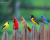 D6eaef91aae6efa3a9643a12e5b2a7cc--pretty-birds-beautiful-birds