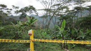 Jungle area in Colombia