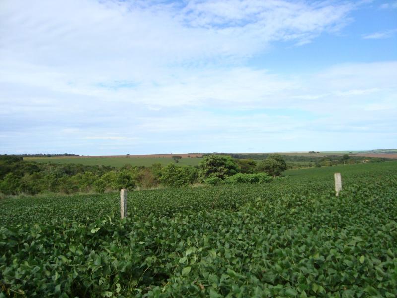 Soya-plantation