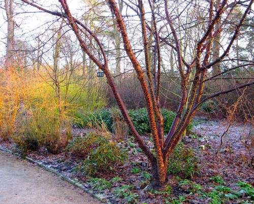 Winter-tree-bark