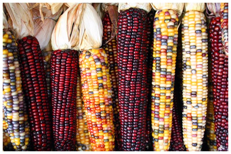Martinez corn