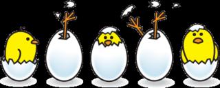 5-chicks-transparentbg