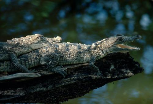Crocodile-fun-BLOG