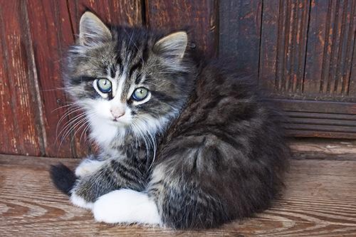 BLOG-cat-cruelty-fbi-500w