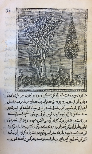 On the left, the famed Chagos tree, the juice of whose fruits is reputed to cure illnesses. On the right, images of native agriculture in South America, including the usage of oxen-like animals to plough fields (BL Or.80.b.7)