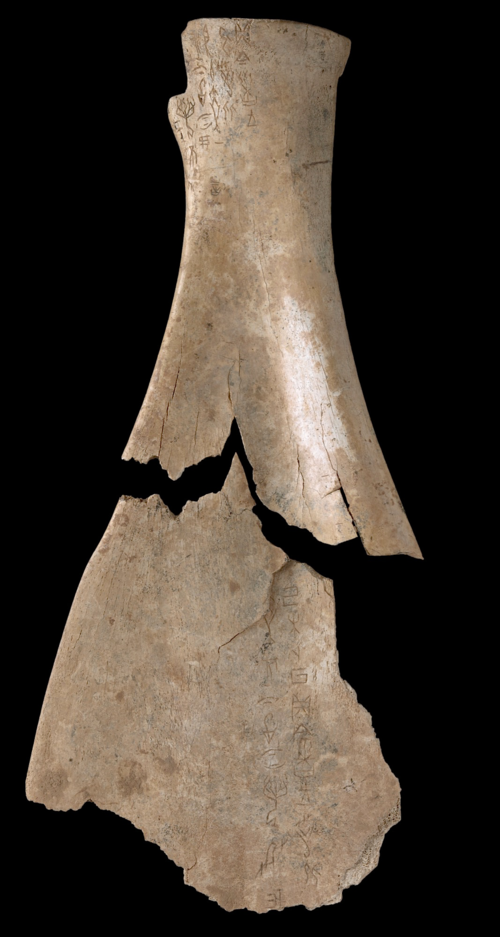 An axe thrust into the Earth Shang dynasty oracle bones, c. 1600 to 1050 BC Or.7694/1592 and Or.7964/1554