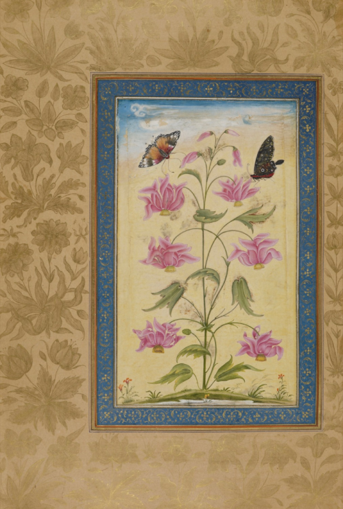 Exotic flowers with butterflies. Mughal, 1630-33 (British Library Add.Or.3129, f.64r)