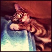 Cat-66821_640