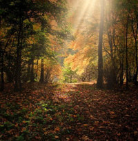 BeFunky_forest-287393_640.jpg