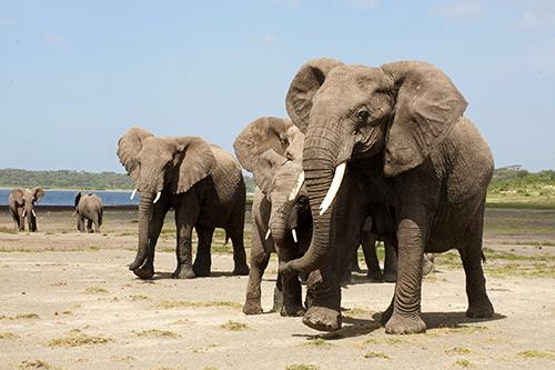Aplive-world-elephant-day-2-500w