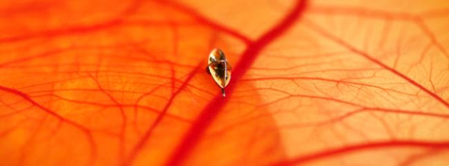 Microrobot dentro del ojo