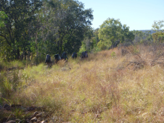 hiking through the King Leopold Ranges