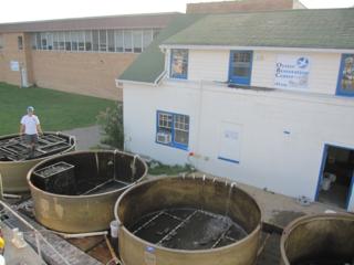 Maryland Oyster Restoration Center