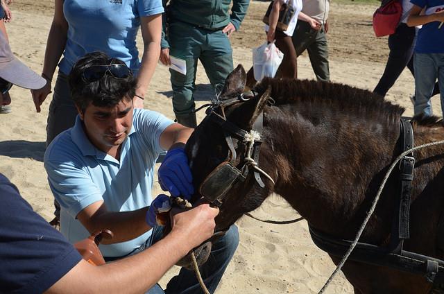 Donkey sanctuary vets attending pony