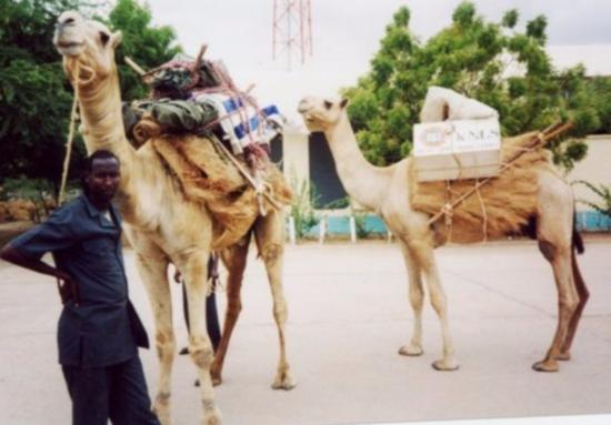 KNLS Camel Library. Kenya
