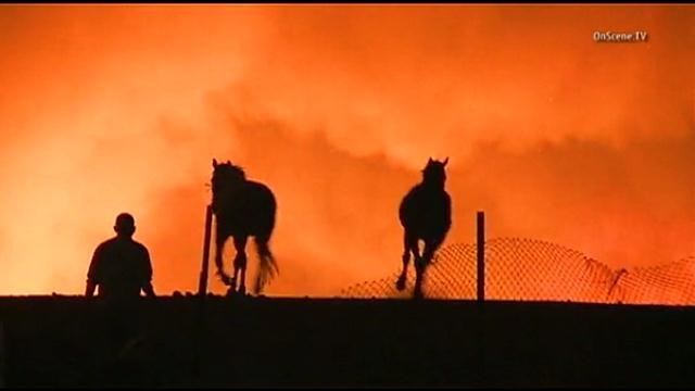 Highway Fire Horses