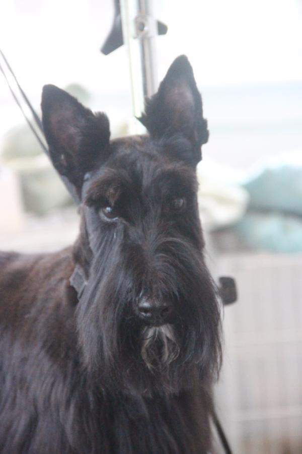 Best Dog Groomer Charlottesville